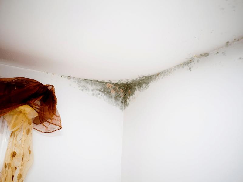 Grzyb na ścianie - jak pomagają farby grzybobójcze